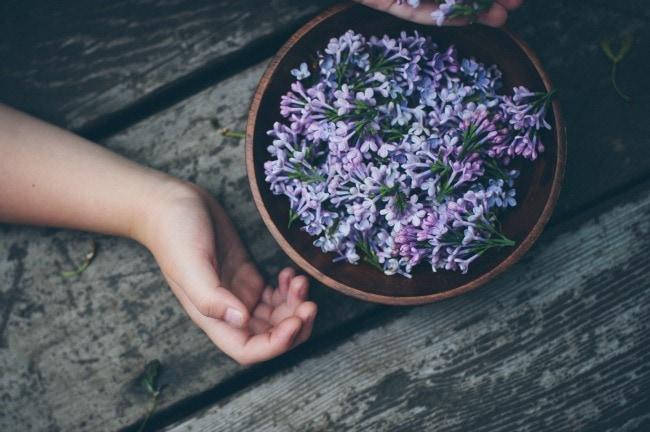 lilac sugar15 (1 of 1)blogsize