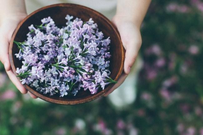 lilac sugar   the vanilla bean blog