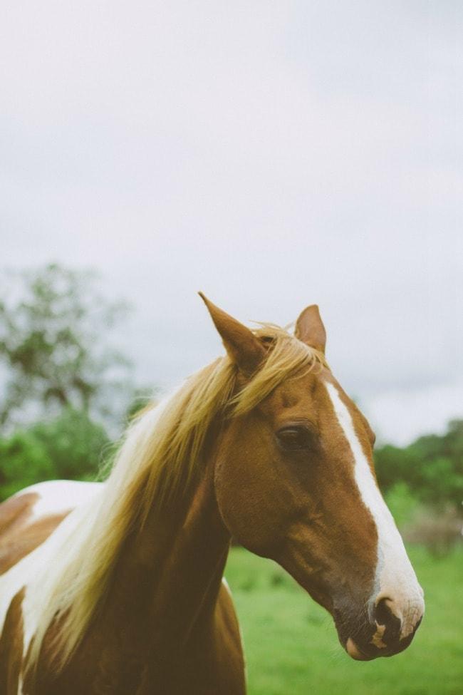moses the horse | sarah kieffer
