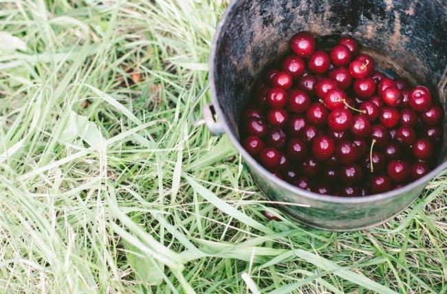 peach and cherry galette | the vanilla bean blog