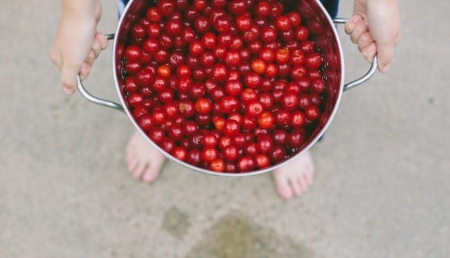 Freshly Picked Cherries | Sarah Kieffer | The Vanilla Bean Blog