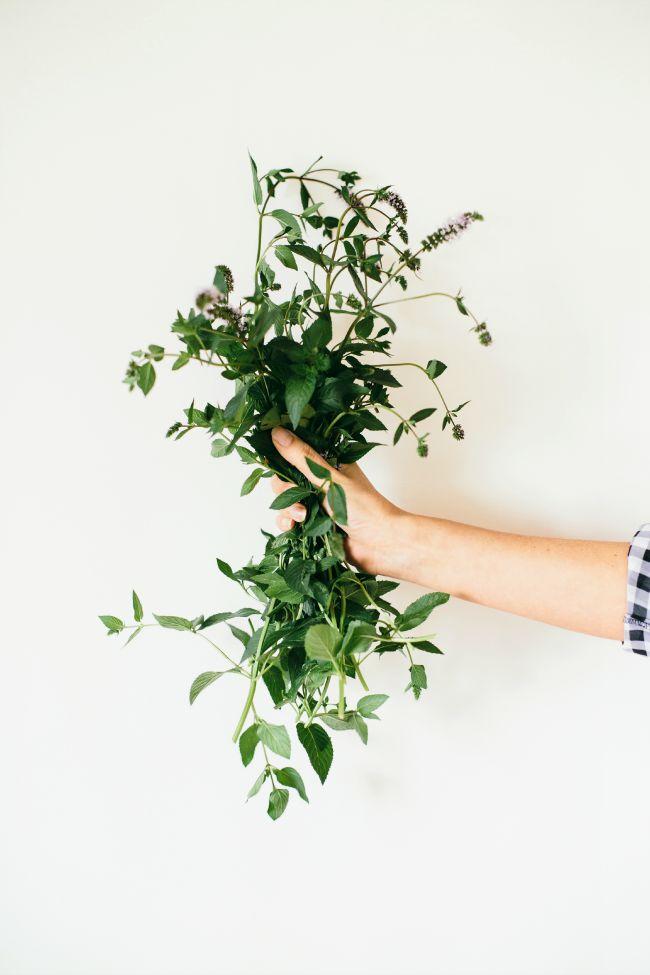 Bunch of Mint | The Vanilla Bean Blog